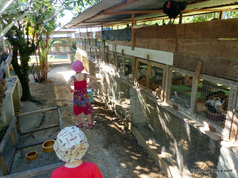 ostrich farm port dickson price attractions