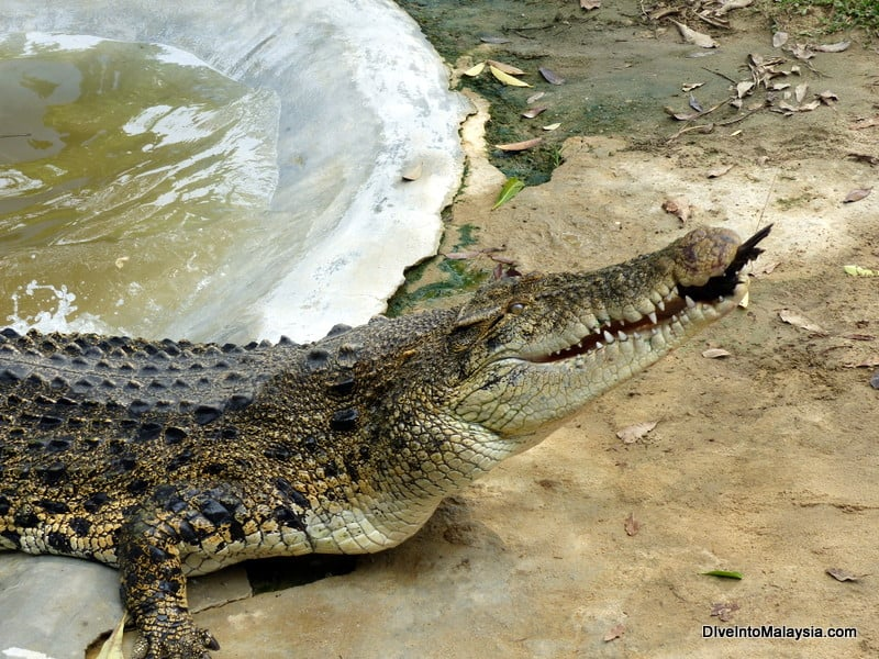 langkawi new attraction Crocodile Adventureland