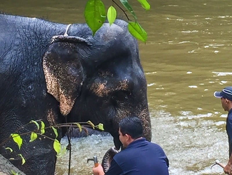 Kuala Gandah Elephant Conservation Centre top 10 adventures in Malaysia