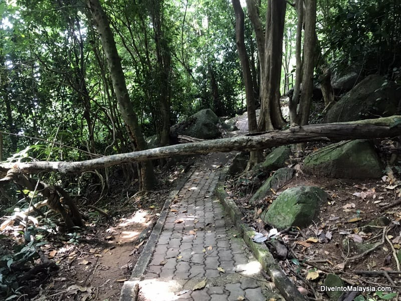 Tree across path in Perhentian Kecil hike