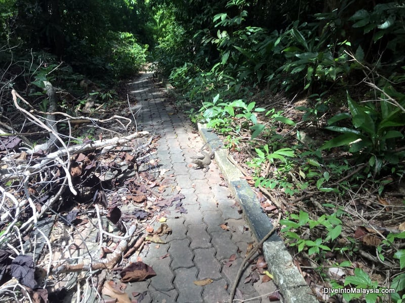A typical part of the path with a friendly lizard