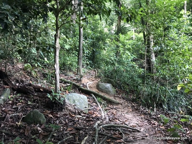 The jungle trek that cuts across Perhentian Besar
