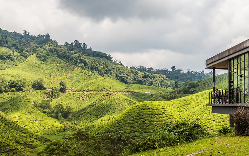 Exactly Where To Stay In Cameron Highlands [2020] - Dive Into Malaysia